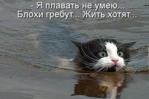 image.kot.thumb.jpg.8ee3803195b53dbbbd98