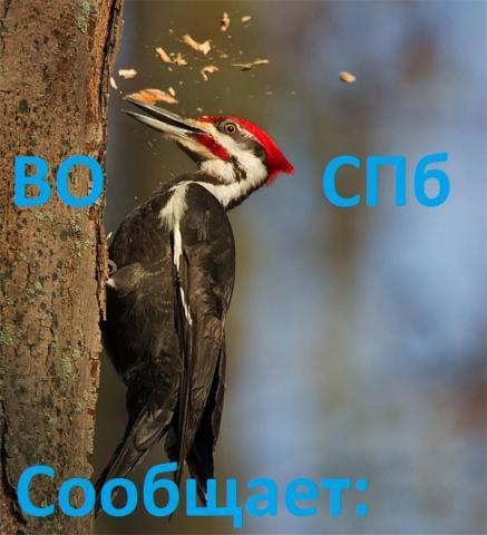 woodpecker10.thumb.jpg.fab943713ed8da7ce48552543f1aaa7d.jpg