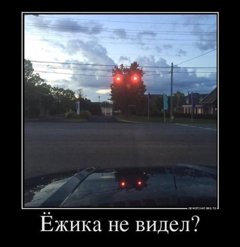 868796702302_yozhika-ne-videl.thumb.jpg.bf24a607e7b9064f8c962b045f8402eb.jpg