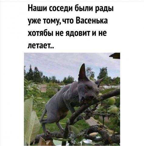 FB_IMG_15954949168848660.thumb.jpg.d1aaf35dae4d0f63934c0cd0a1fcac86.jpg
