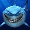 SharkFFc